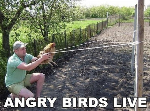 Angry Birds по-русски