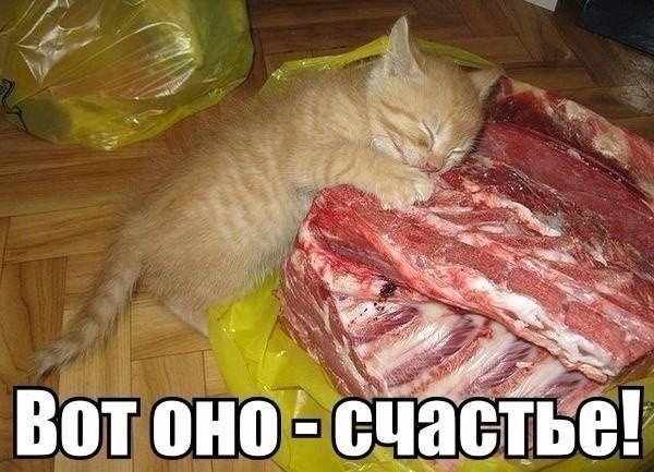 Кот с мясом