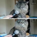 Создать Кот интервью Мем