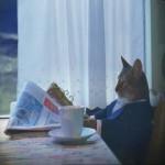 Создать Кот читает газету - Мем Мем