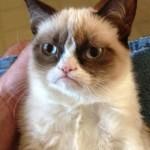 Создать Грустный кот - Мем Мем